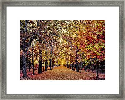 Golden Alley In La Granja De San Ildefonso In Segovia, Spain Framed Print by Hans Schrodter