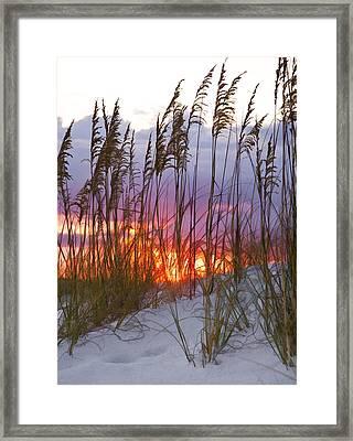 Golden Amber Framed Print