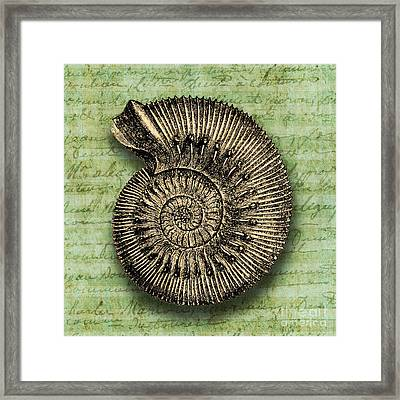 Golden Ammonite Framed Print by Ramneek Narang