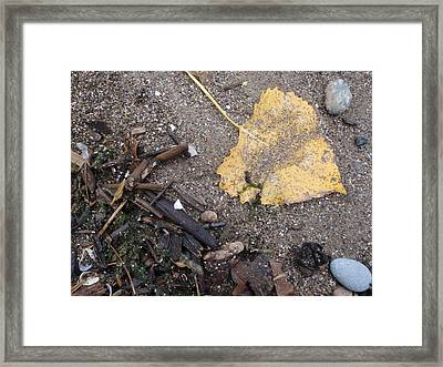 Golden Framed Print by Anthony Haight