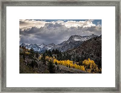 Golden Aspens And Snow Framed Print