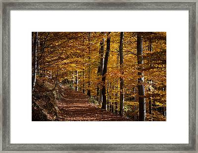 Golden Autumn Framed Print