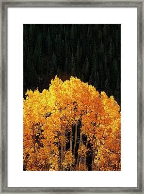 Golden Autumn Framed Print