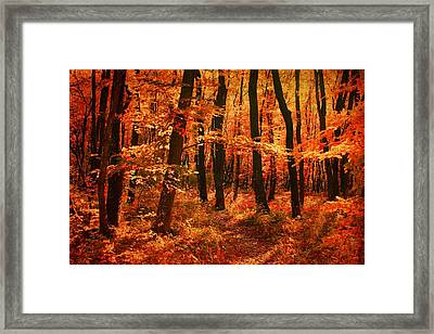 Golden Autumn Forest Framed Print
