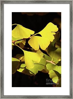 Golden Autumn In Tokyo Framed Print