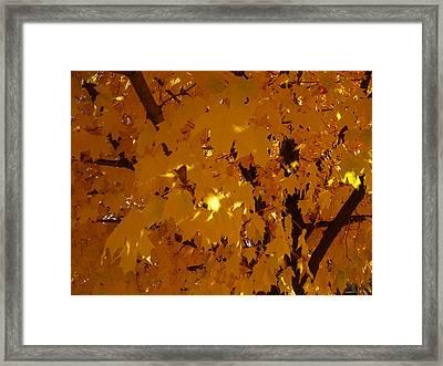 Golden Autumn Framed Print by Stephen Davis