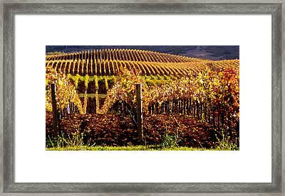 Golden Autumn Vineyard Framed Print by Jeff Lowe