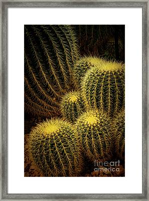Golden Ball Cactus - Milwaukee Domes Framed Print by Mary Machare