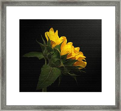Framed Print featuring the photograph Golden Beauty by Judy Vincent