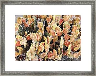 Framed Print featuring the photograph Golden Beaver Tail Catcus by Linda Phelps