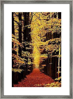 Golden Beech Lane Framed Print by Roeselien Raimond