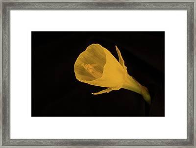Golden Bells Carpet Daffodil Reproductive Structures Framed Print