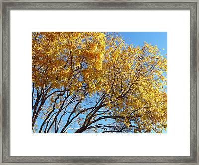 Golden Boughs Framed Print by Rhonda Chase