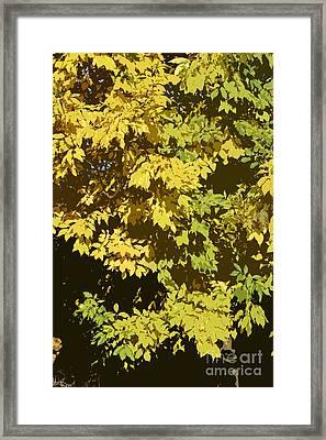 Golden Branches Framed Print by Carol Lynch