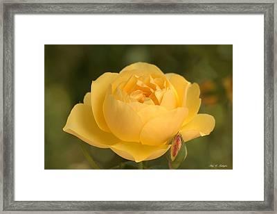 Golden Breath Framed Print