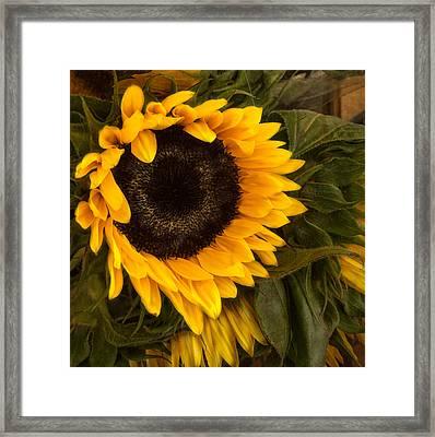 Golden Bright Framed Print