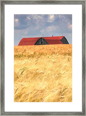 Golden Brown.... Framed Print by Russell Styles