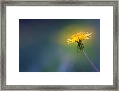 Golden  Framed Print by Bulik Elena