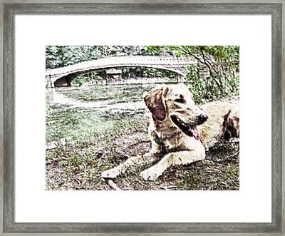 Golden By Bow Bridge Framed Print by Rora