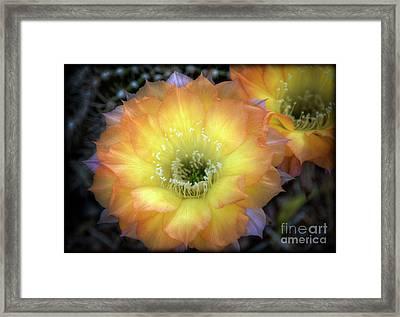 Golden Cactus Bloom Framed Print