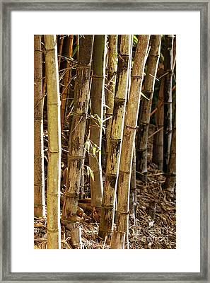 Framed Print featuring the photograph Golden Canes by Linda Lees