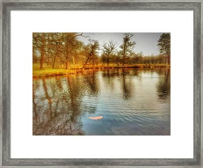 Golden Carp Framed Print