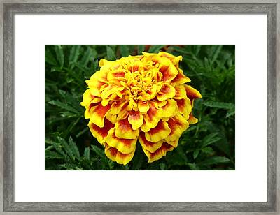 Golden Cascade Framed Print