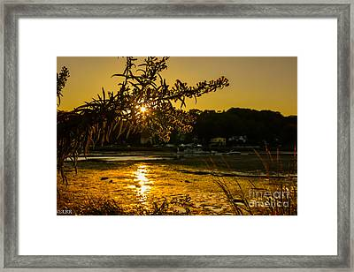 Golden Centerport Framed Print