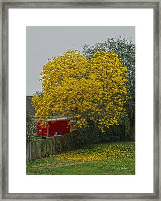 Golden  Framed Print by Chauncy Holmes