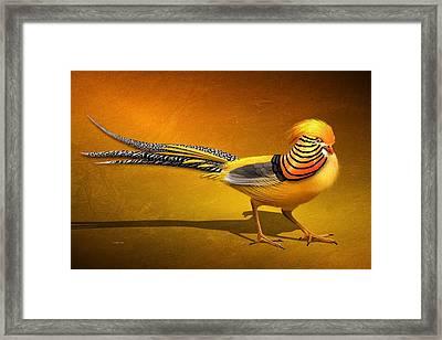 Golden Chinese Pheasant Framed Print by John Wills