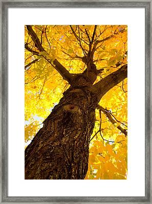 Golden Climb Framed Print by James BO  Insogna