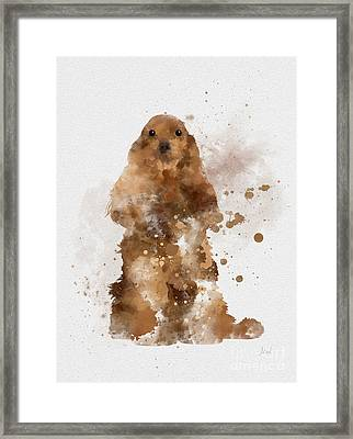 Golden Cocker Spaniel Framed Print by Rebecca Jenkins