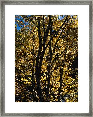 Golden Colors Of Autumn In New England  Framed Print by Erin Paul Donovan