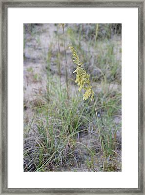 Golden Comb Framed Print by JAMART Photography