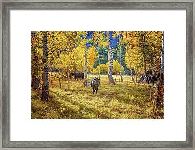 Golden Cow Pasture Framed Print by Lynn Bauer