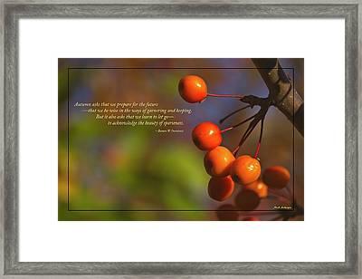 Golden Crab Apples In The Sun Framed Print