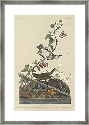 Golden-crowned Thrush Framed Print by Dreyer Wildlife Print Collections