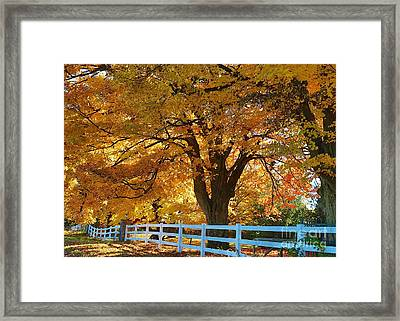 Framed Print featuring the photograph Golden Curtain by Robert Pearson
