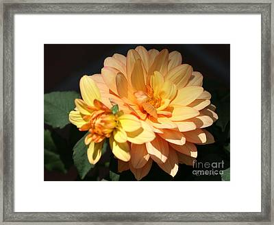 Golden Dahlia With Bud Framed Print