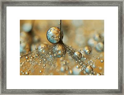 Golden Dandy Shower Framed Print