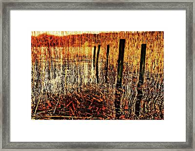 Golden Decay Framed Print by Meirion Matthias