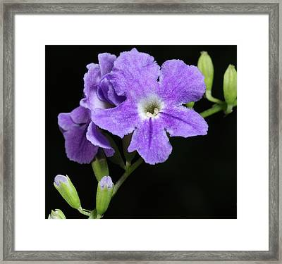 Framed Print featuring the photograph Golden Dewdrop II by Richard Rizzo