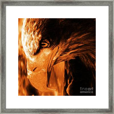 Golden Eagle Framed Print by Gull G