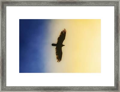Golden Eagle Over Friday Harbor Framed Print