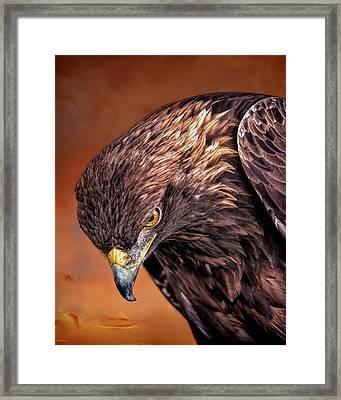 Golden Eagle Sunset Framed Print