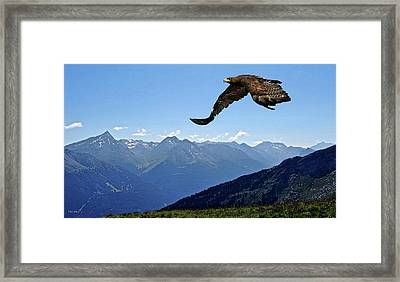 Golden Eagle Framed Print by Thomas Pollart