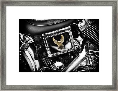 Golden Eagle Framed Print by Tim Gainey