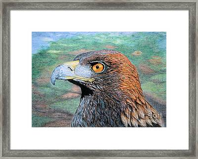 Golden Eagle Framed Print by Yvonne Johnstone