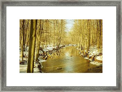 Framed Print featuring the photograph Golden Early Spring In Ontario by Maciek Froncisz