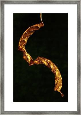 Golden Earring Framed Print by Murray Bloom